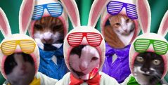 cropped-easter-cats.jpg